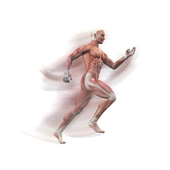 Online Kurs Haltung und Bewegung: Muskeln, Faszien und Gelenke optimal trainieren